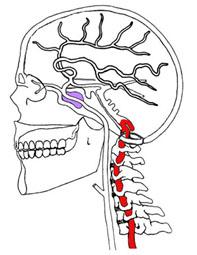 Vertigine fig.7 arterie vertebrali