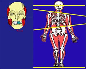 Fig. 4 cranio e postura