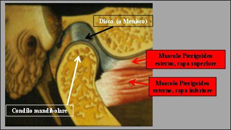 Fig.1 Pat. ATM anatomia