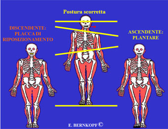 Fig.1 ascendente e discendente