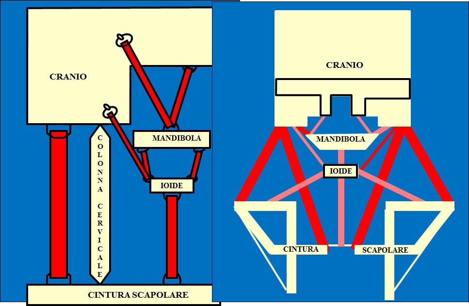 Fig.2 schema di Brodie